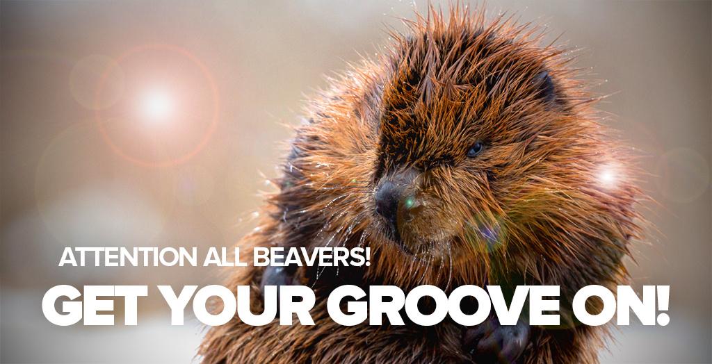 dancing-beaver