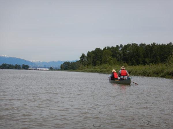 Ladner Marsh Trip Report - May 21, 2017